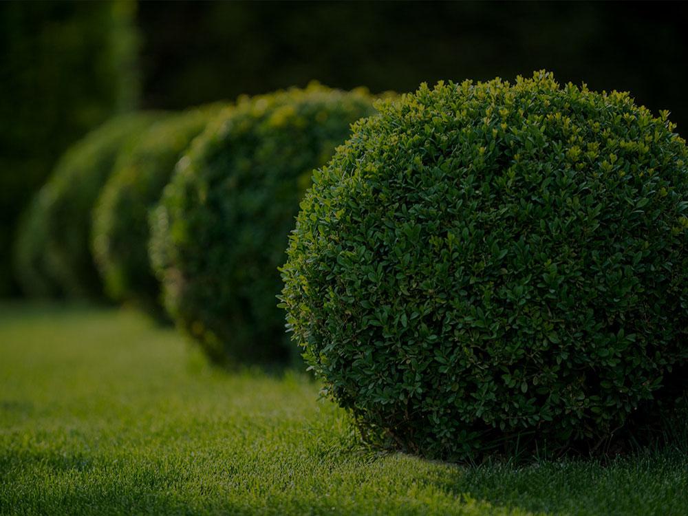 Moncton Landscaping