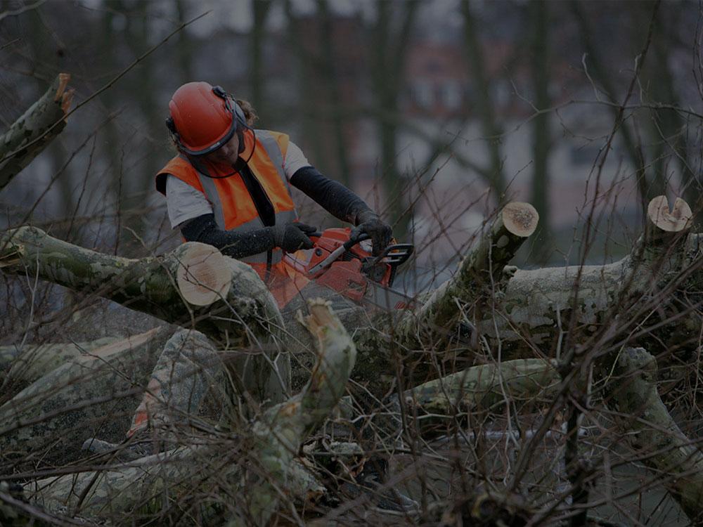 Moncton Tree Service